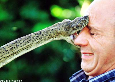man getting bit by snake in the face