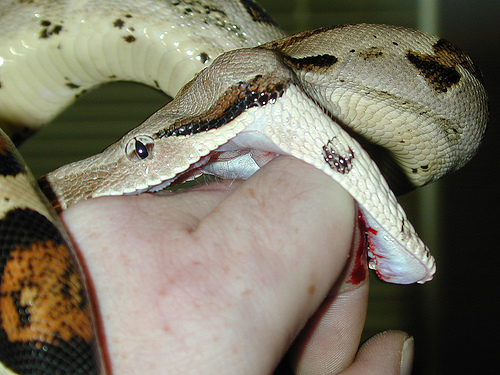 man getting bit by snake on the hand