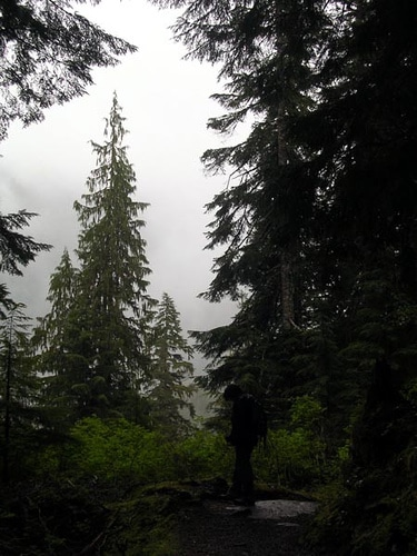 man among pine trees in mt. baker-snoqualmie forest
