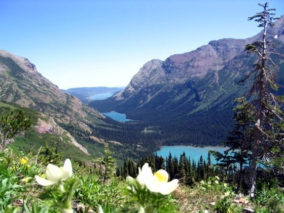 glacier national park scenery lakes mountains flowers