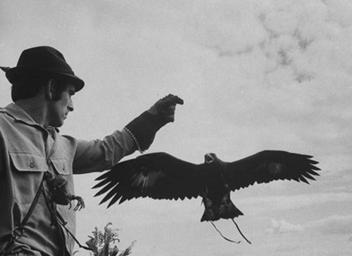 Vintage man practicing falconry with glove.