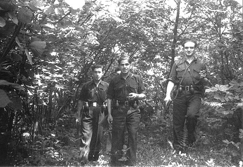 A group of men holding guns in forest.