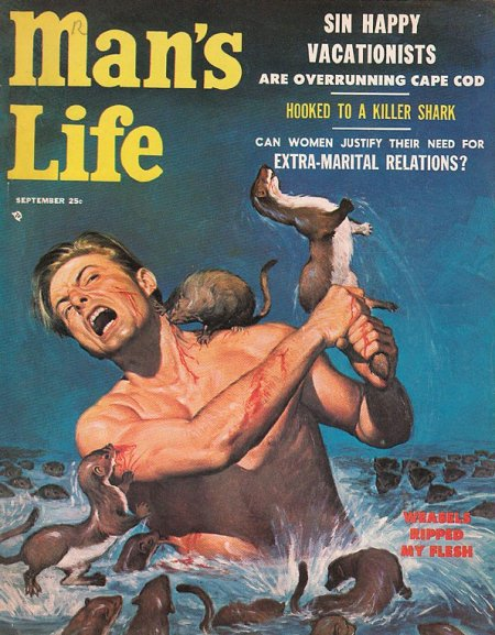 Man's life vintage men's magazine cover weasels eating biting a man.