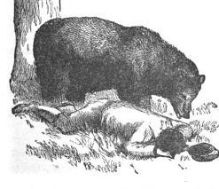 bear and man lying down aesop's fables illustration drawing
