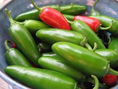 jalapeño peppers in pail