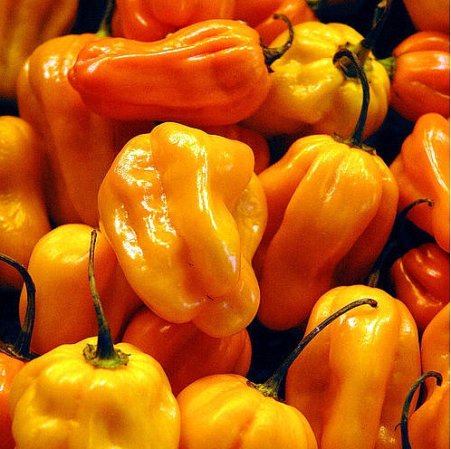 orange habanero peppers