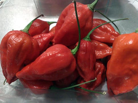 naga viper peppers in bowl