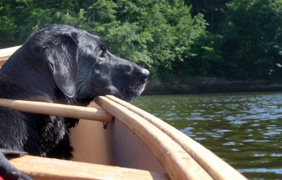 Black dog sitting at the side of canoe in lake.