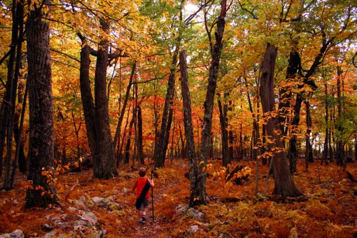 Boy walking in the jungle on the orange red leaves in autumn season.