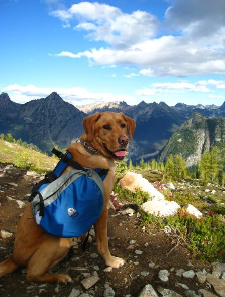 Dog with backpack hiking on mountains landscape scene.