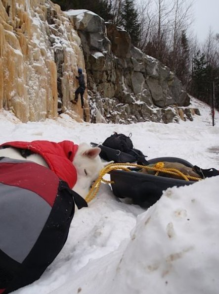 white dog on snowy trail taking rest lying down
