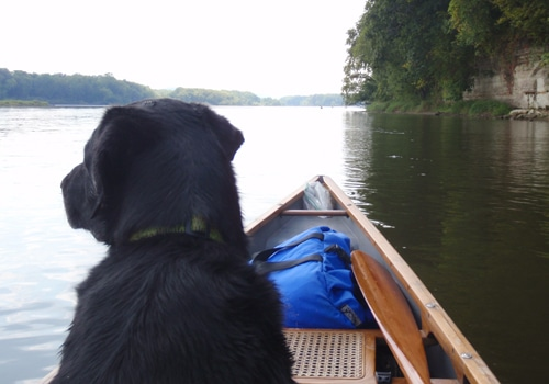 black lab dog sitting in front of canoe on lake