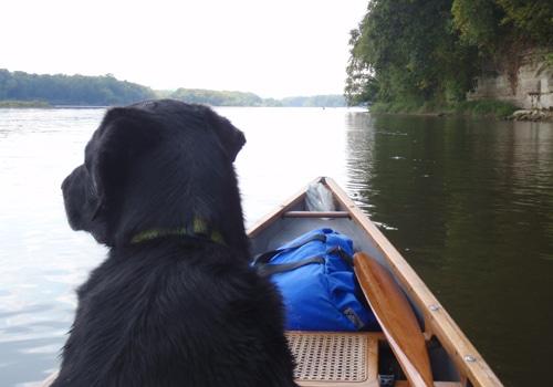 Black dog sitting in front of canoe in lake.