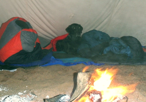 dog lying down next to fire campsite tent