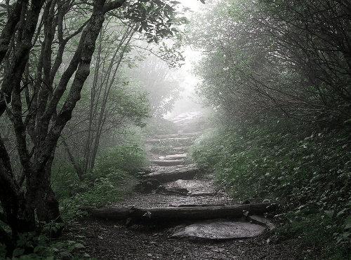 walking hiking trail path through foggy forest
