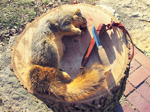 A dead squirrel and a knife on a wooden log.