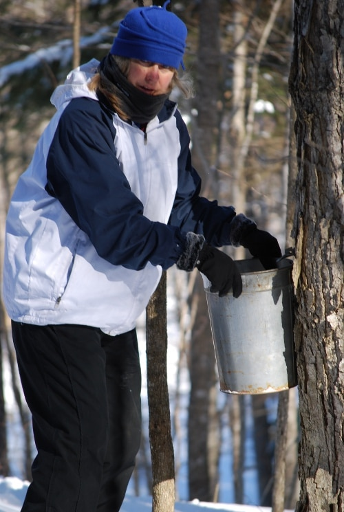 Man hanging bucket on tree in woods.