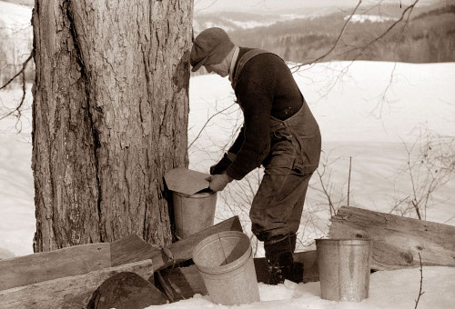 Man covering vermont syrup bucket in cold weather.