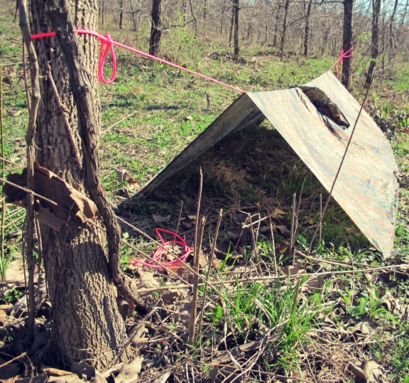 Making survival shelter from rain by binding with trees.