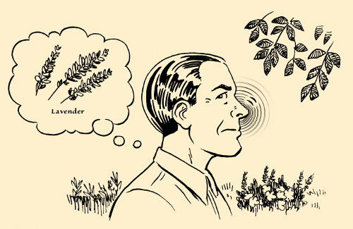 concentration exercise man smelling plants flora illustration