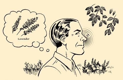 concentration exercise man smelling plants flora illustration