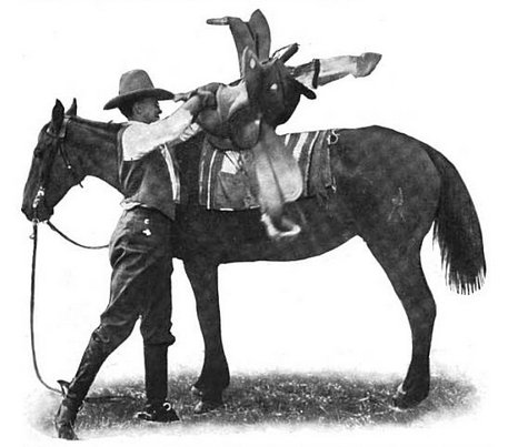 Vintage man cowboy throwing saddle onto horse.