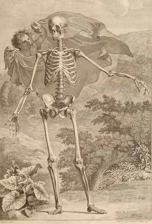 Sceleti et musculorum corporis humani by Bernhard Siegfried Albinus, 1749.