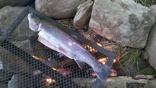 Fish barbecue on coal.
