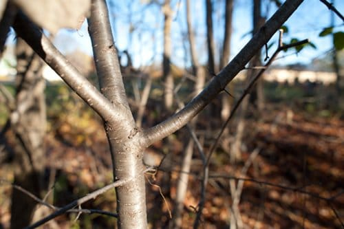 close up small tree with branches in woods