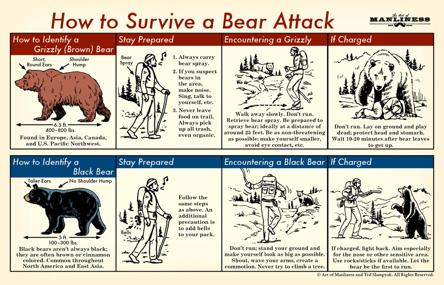 How to identify a grizzly (brown) bear: short round ears, should hump, 6.5 ft long, 400-800 lbs, found in Europe, Asia, Canada, and US Pacific Northwest.  Stay Prepared. 1. Always carry bear spray. 2. If you suspect bears in the area, make noise. Sing, talk to yourself, etc. 3. Never leave food on trail. Always pick up all trash, even organic.  Encountering a Grizzly. Walk away slowly. Don't run. Retrieve bear spray; ideally at a distance of around 25 feet. Be as non-threatening as possible; make