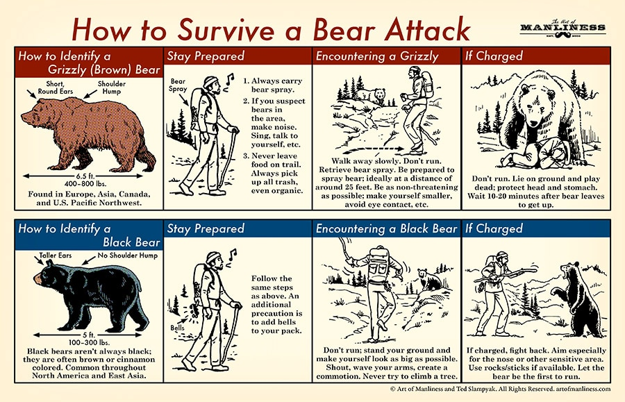 how to survive a bear attack illustrated