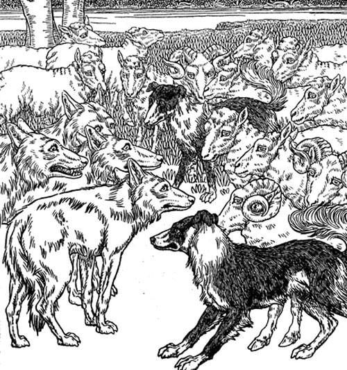 illustration sheepdog protecting sheep from wolves