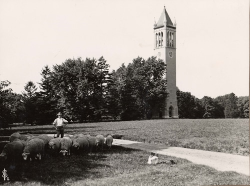 Vintage Iowa state university land grant farmer with sheep on grounds.