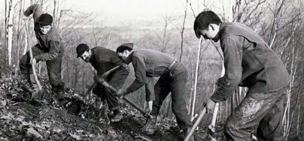 Vintage men digging on hillside.