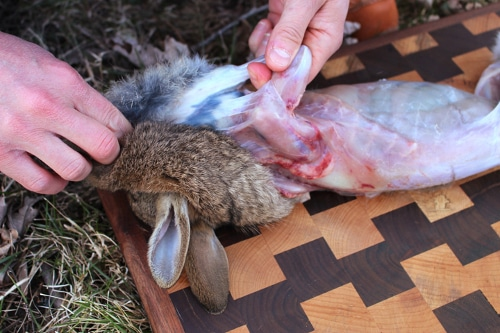 You'll want to work the legs out. A sharp tug will tear the hide and leave the fur on the feet like little shoes.