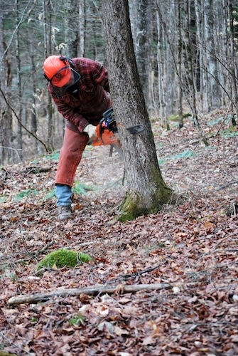 man sawing down tree in forest with chainsaw