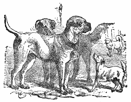 vintage illustration large dogs ruling over small dogs