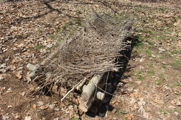 survival shelter evergreen branches laid in herringbone pattern