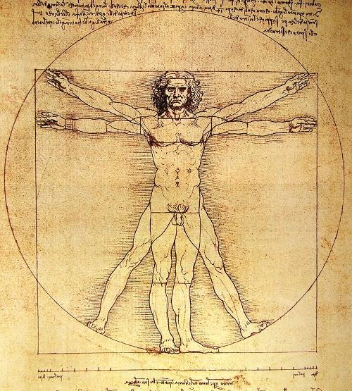 Vitruvian man on anatomy illustration.