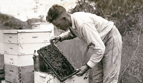 Vintage man beekeeper with hives in field.