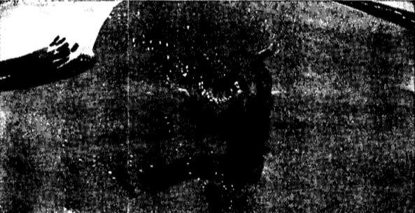 Vintage WWII Bob under breaking wave; do not fight undertow illustration.