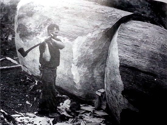 vintage man chopping giant tree