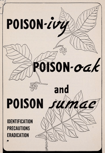 vintage illustration poison ivy oak sumac