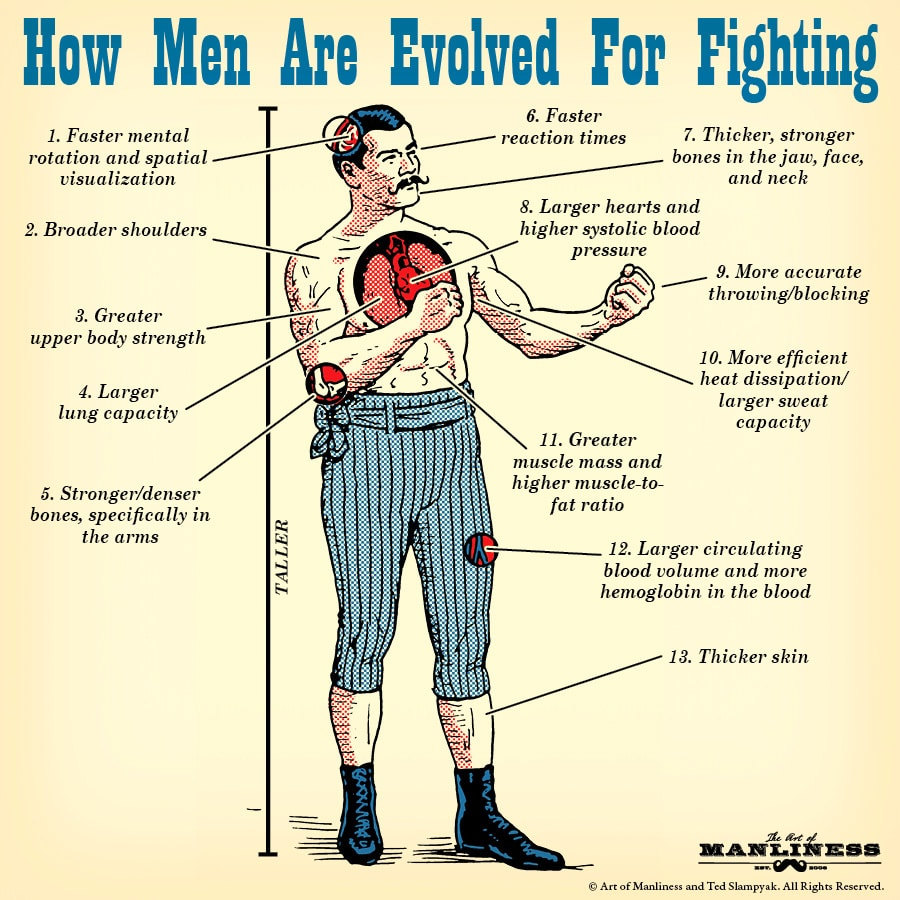 vintage man anatomy cross section evolved for fighting