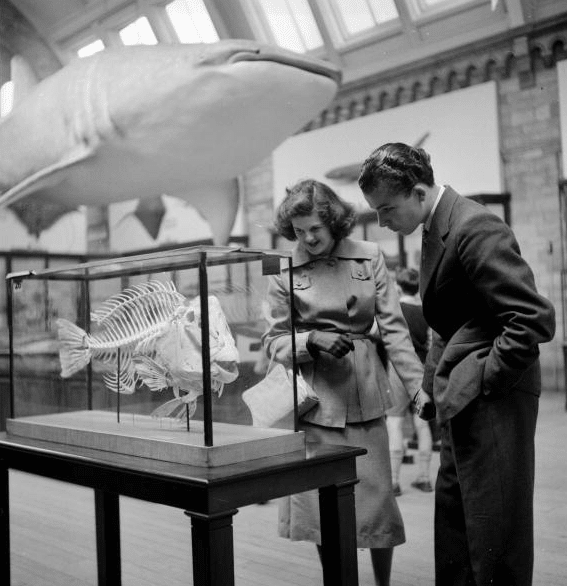 Vintage couple looking at fish skeleton in museum.