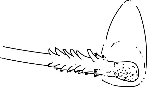 match feather stick survival hack illustration