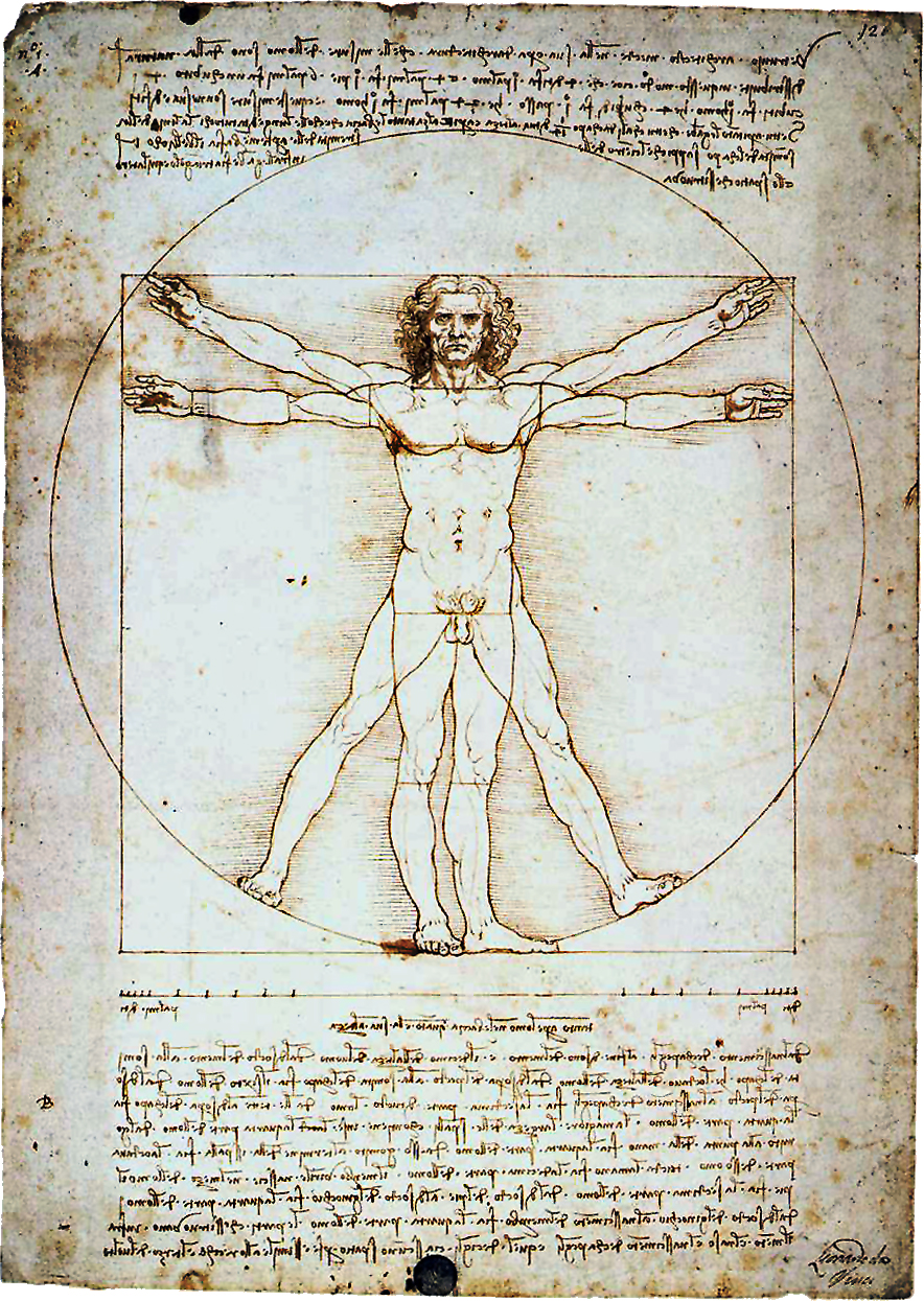 vitruvian man illustration renaissance old book page