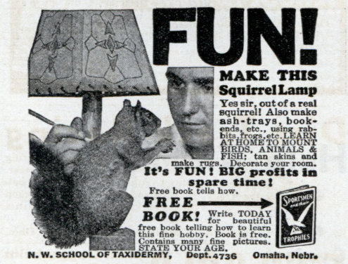 Vintage Squirrel Lamp taxidermy advertisement.