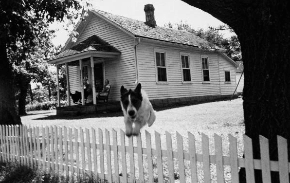 vintage black white dog jumping over fence