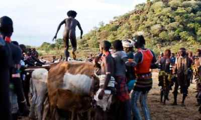 hamar cow jumping photo male rite of passage
